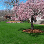New England Green Lawn Care